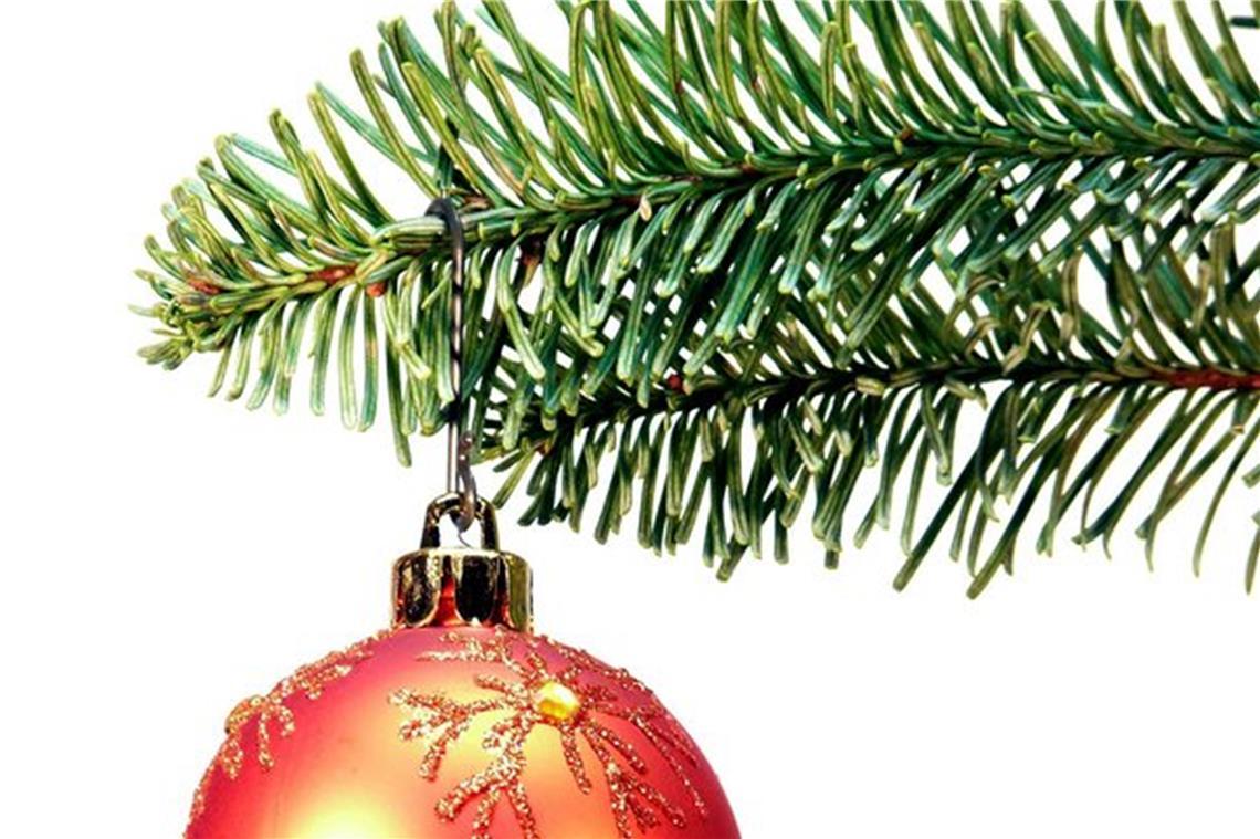 Weihnachtsbaum Fällen.Zecken Fallen Auch Vom Weihnachtsbaum