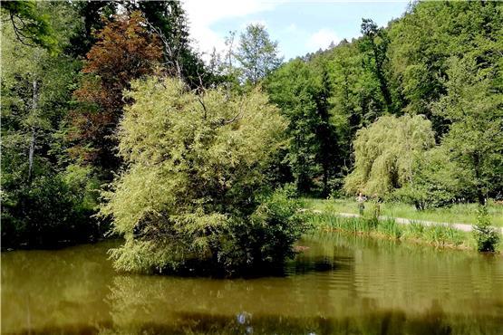 Hinaus ins Grüne: Rundwanderung von Entringen zum Schloss Hohenentringen